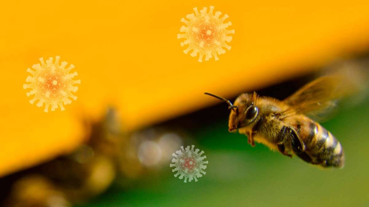 Train Bees to Detect COVID-19